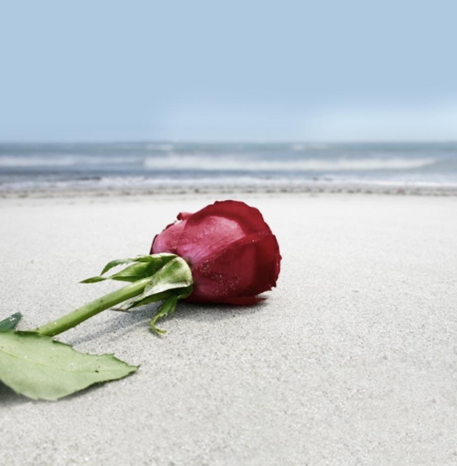 strand_rose